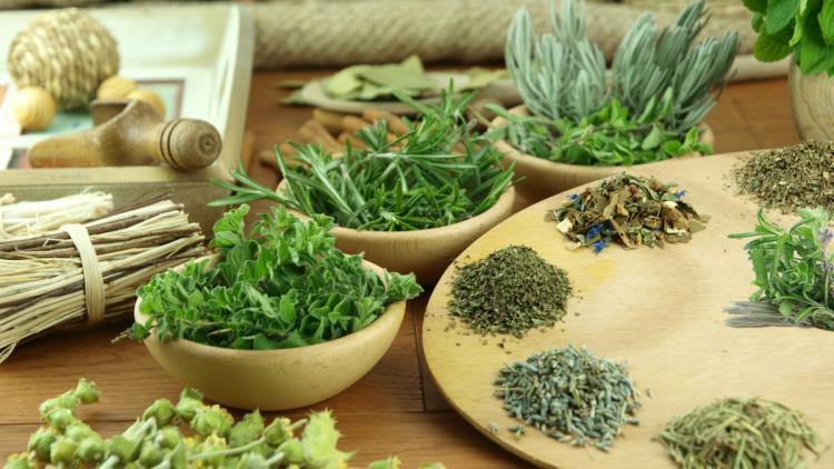Травы от варикоза вен на ногах: народные рецепты