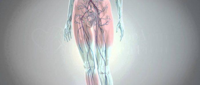 Гиперосмия: этиологияявления и симптоматика, как бороться с недугом и виды нарушений, симптомы и лечение народными средствами